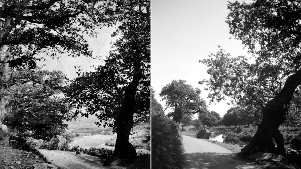 Bradgate Park in 1869 and Bradgate Park in in 2020