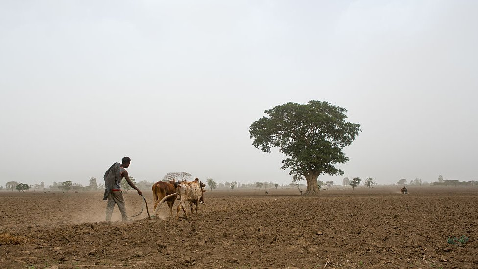Man ploughing field in Ethiopia