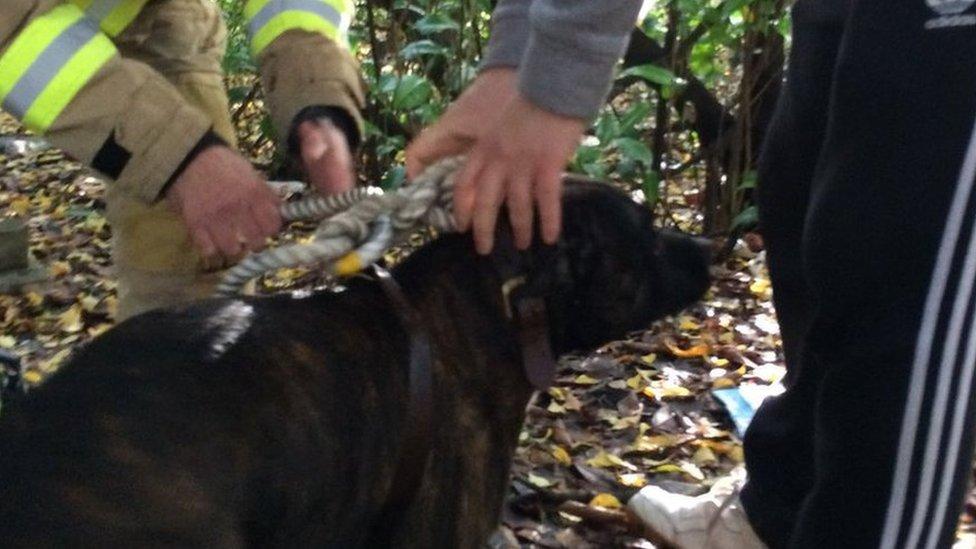 Dog rescued from storm drain in Welwyn Garden City