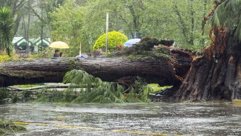 A tree lies on a road after it was toppled by Typhoon Goni in Baguio City 22/08/2015