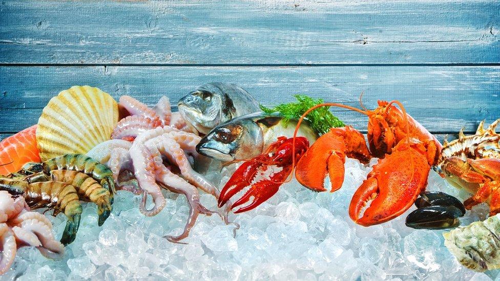 riba morski plodovi