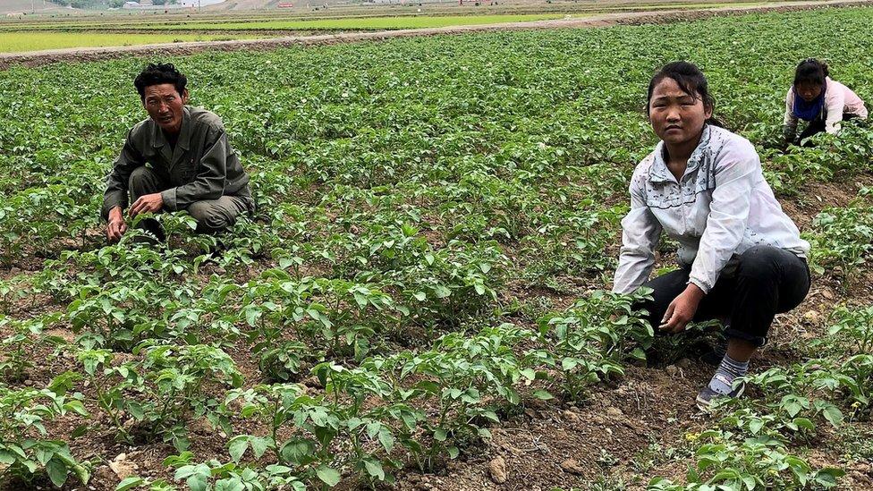 sembradores norcoreanos.