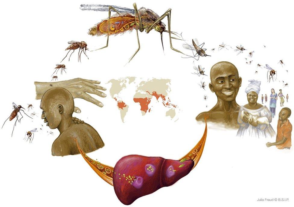 Ilustración de la malaria.
