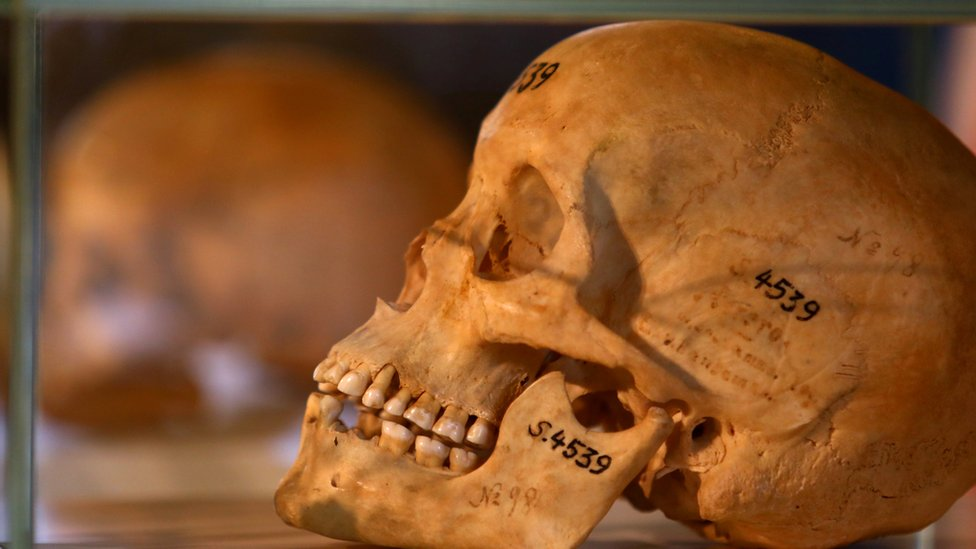 A skull with a catalogue number on it