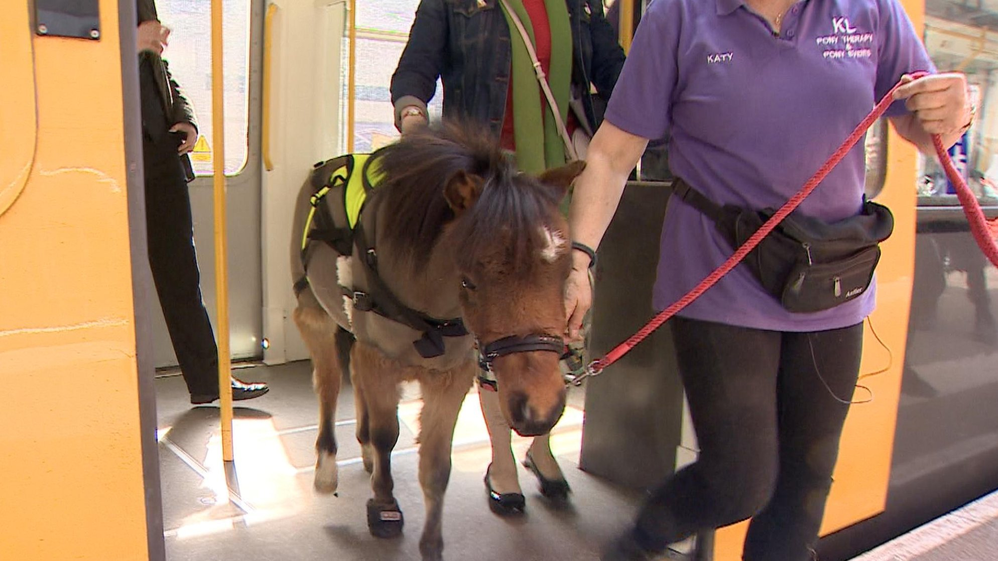 A guide horse's day out on Tyne & Wear Metro training