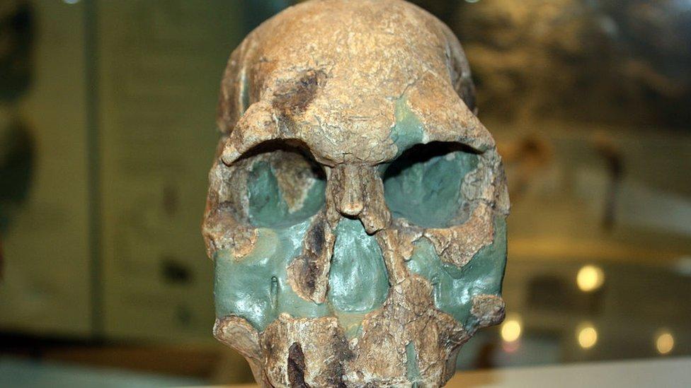 Homo rudolfensis.