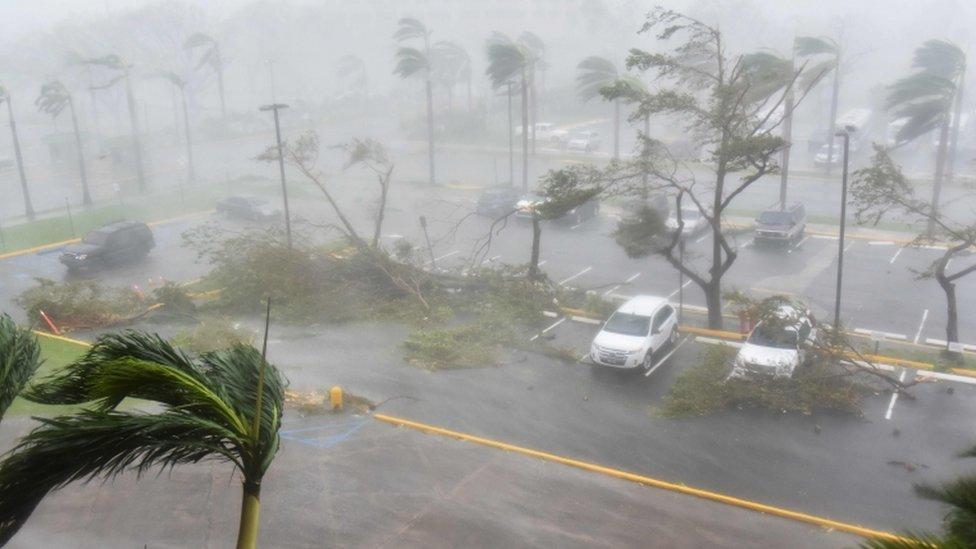 Árboles arrancados en un aparcamiento en San Juan, Puerto Rico, el 30 de septiembre de 2017.