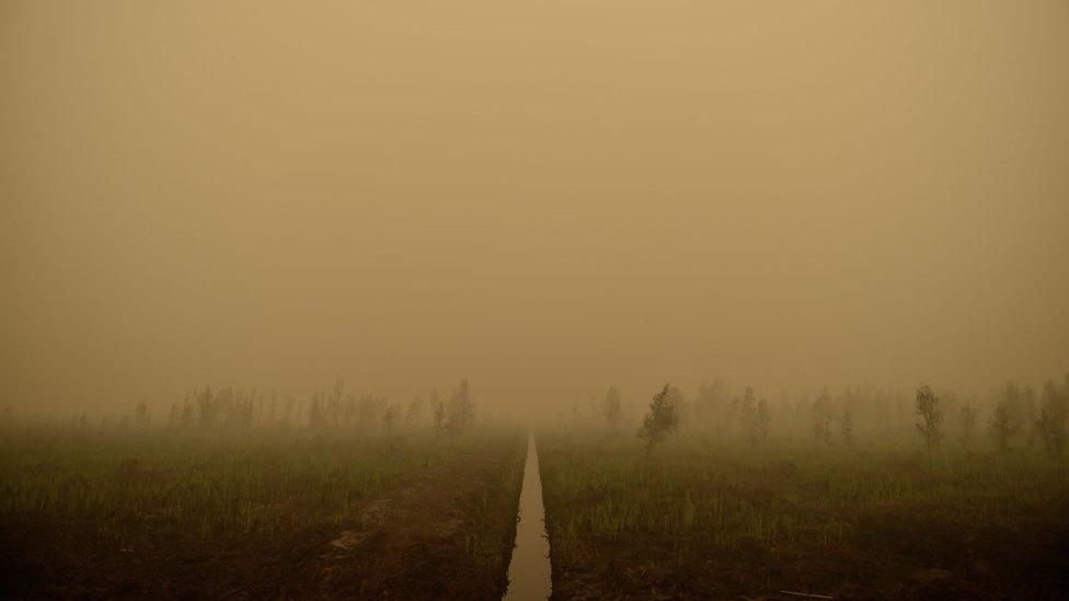 Haze fills the air in Tumbang Nusa, Central Kalimantan, on 25 October 2015