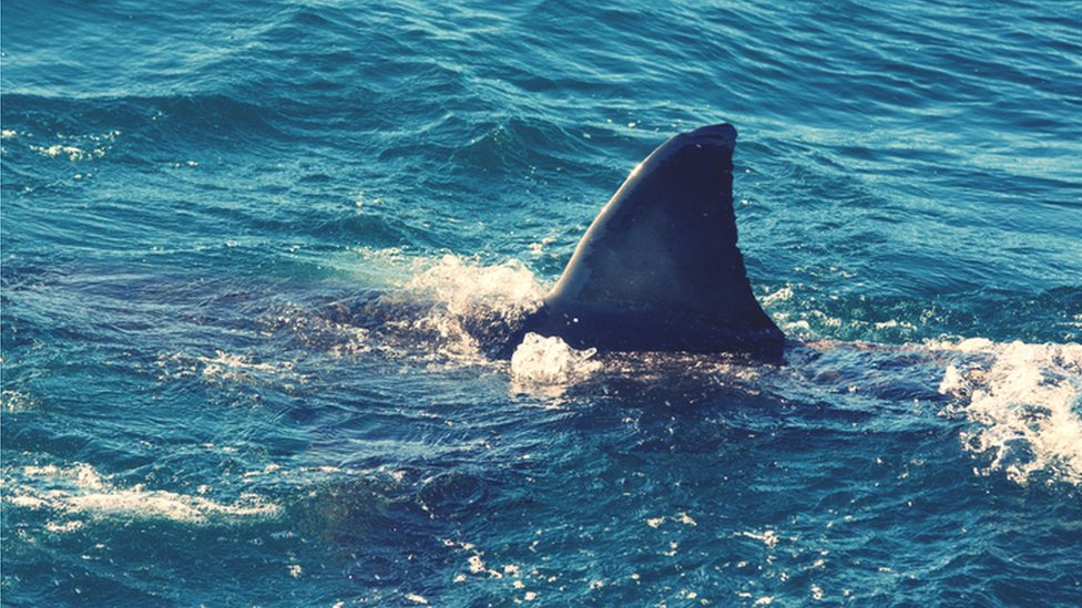 New Zealand: Woman dies in rare suspected shark attack thumbnail