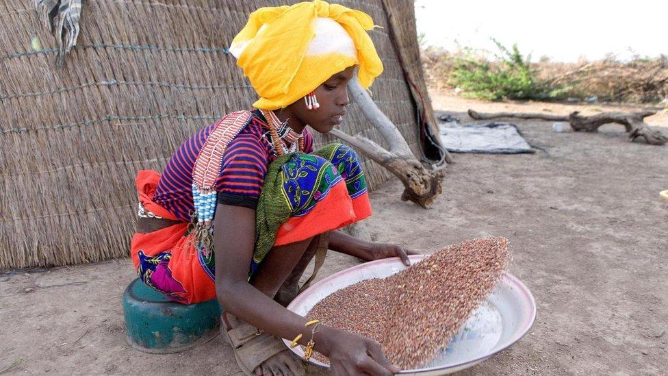 El tef se cultiva en Etiopía y en Eritrea desde hace, al menos, 2.000 años.