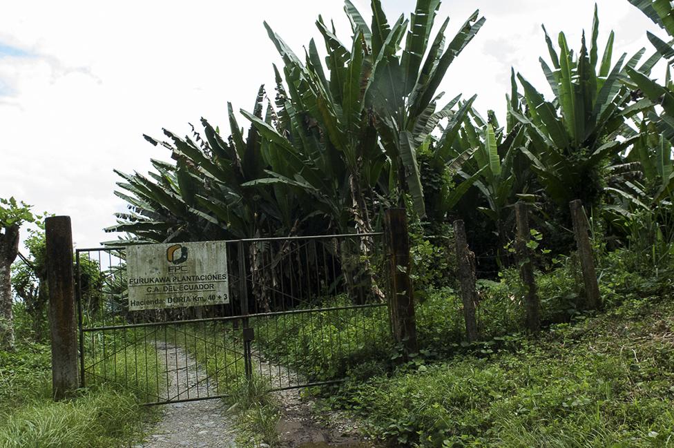 Una de las haciendas de Furukawa Plantaciones C.A. del Ecuador
