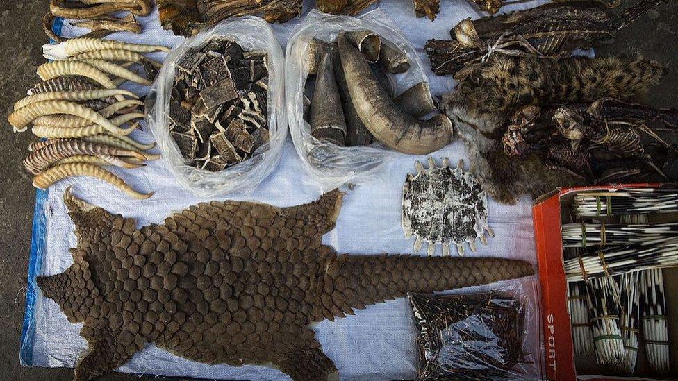 Partes de animales salvajes en un mercado.