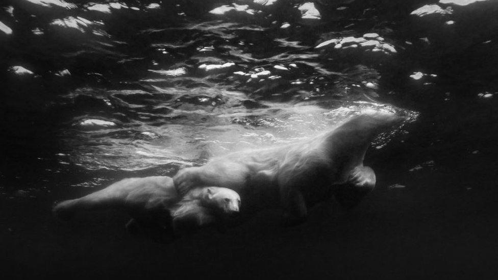 Polar bear with its cub