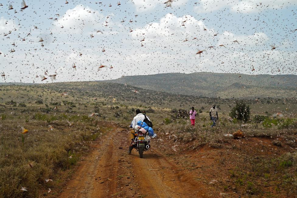 Skakavci u Borani, Kenija