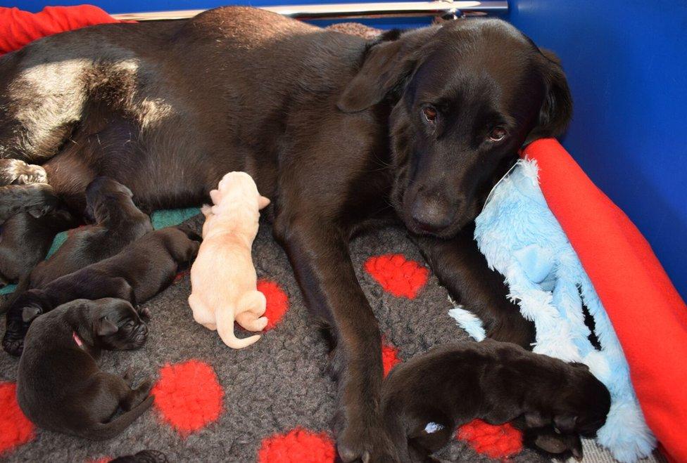 Ebi leži pored štenaca