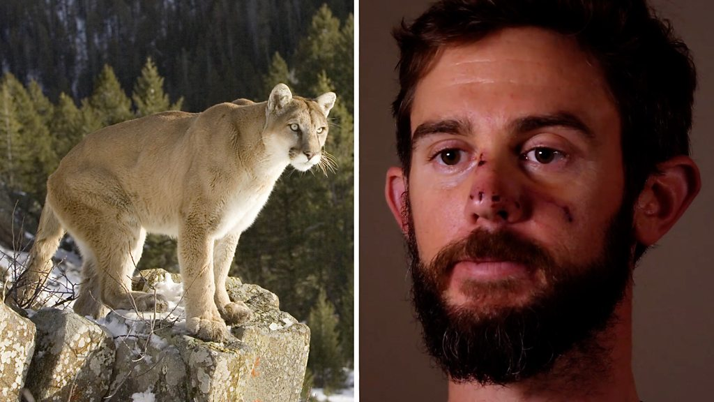 Hiker takes on mountain lion, and wins
