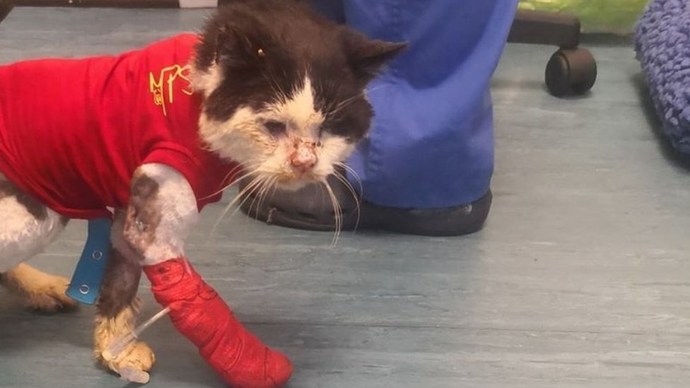 Maximus after he was rescued