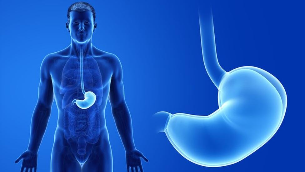 Ilustração do sistema digestivo humano