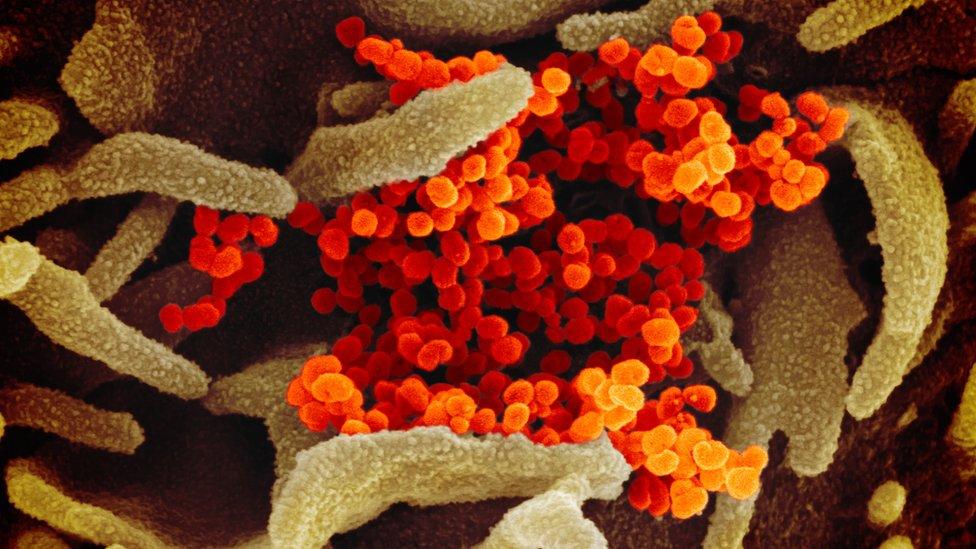 Imagen microscópica del coronavirus