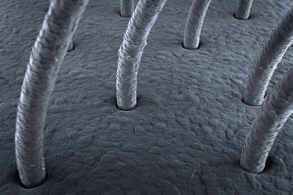 Imagen microscópica del pelo