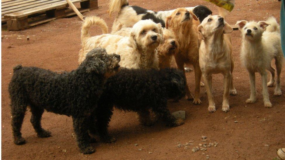 Imagens de cães em abrigos assistidos pela ONG Cão Sem Fome