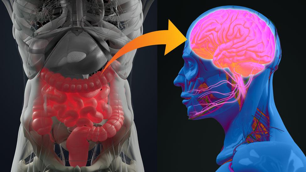La conexión neuronal entre el intestino y el cerebro