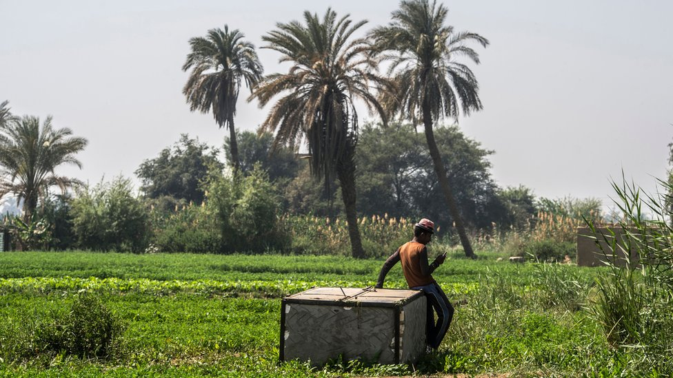 Un granjero egipcio usa un teléfono inteligente para mejorar su negocio.