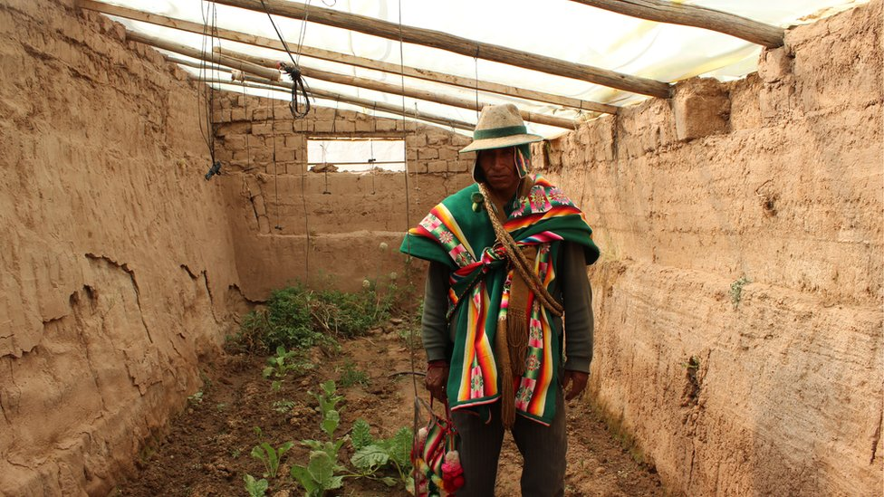 Este pequeño Walipini produce tomates, acelgas, pepinos, repollos y perejil, entre otros vegetales, que han enriquecido la dieta de la familia Condo.