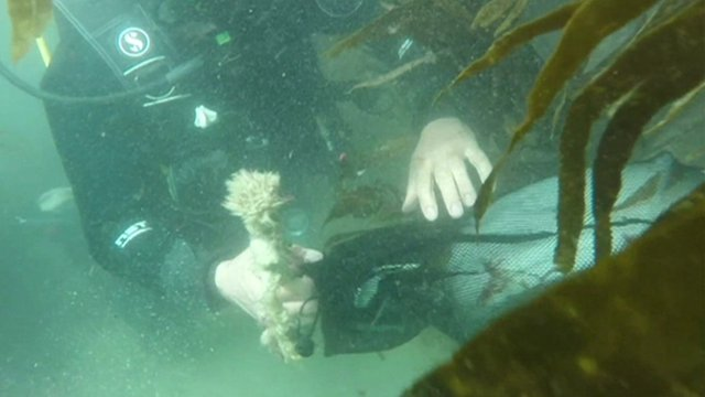 Divers cleaning up rubbish in Cornwall