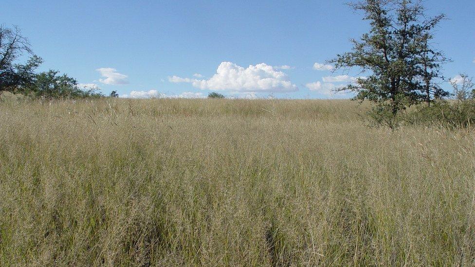 Grassland in Arizona, US (Image courtesy of Dr John Wiens)