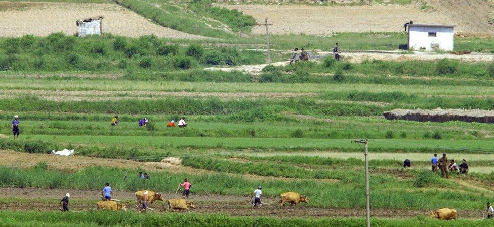 Labradores norcoreanos en la aldea de Panmunjom, al norte de Seúl. 2 de junio de 2004