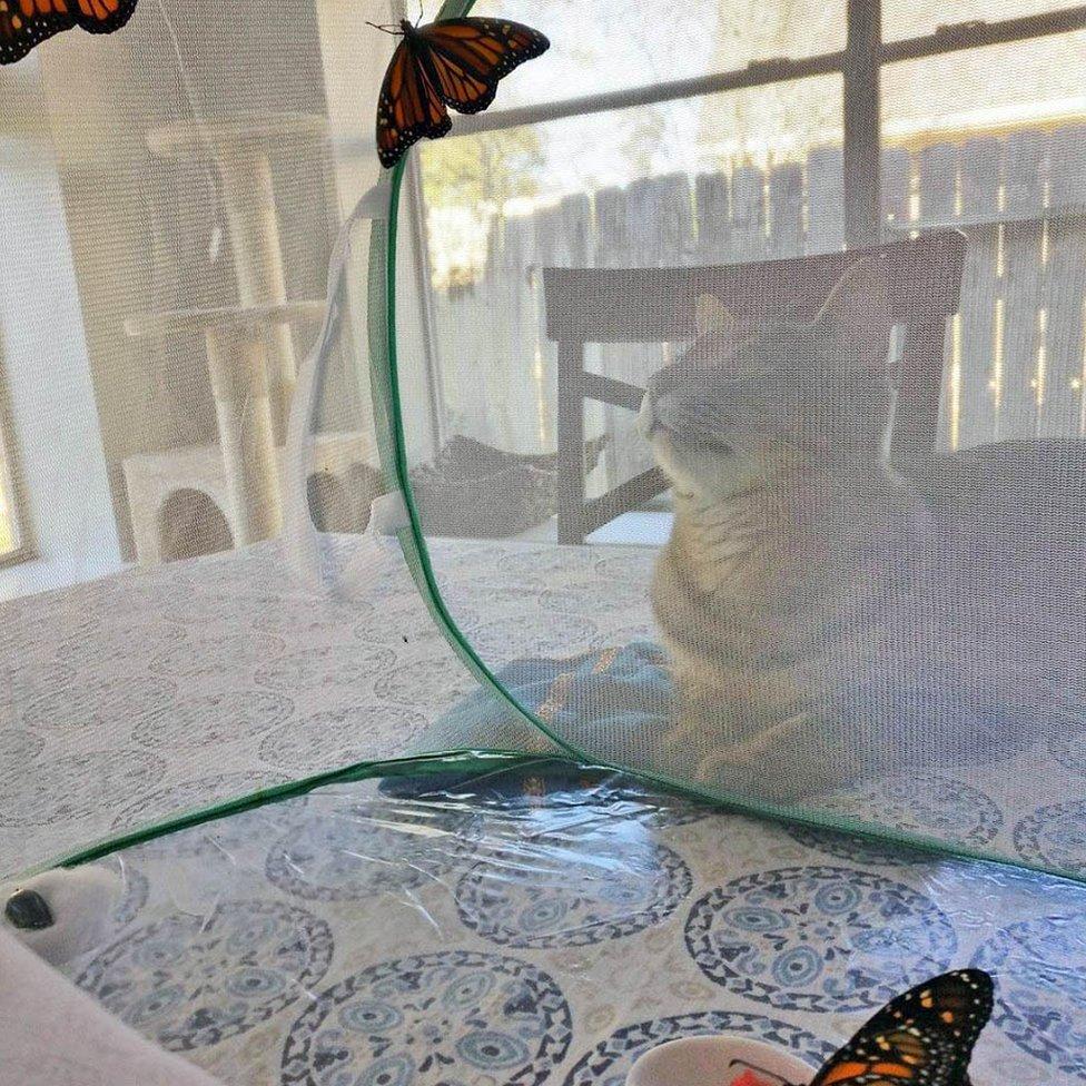 Mačak Floki merka kavez s leptirima