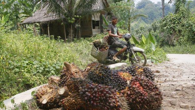 palmiye yağı