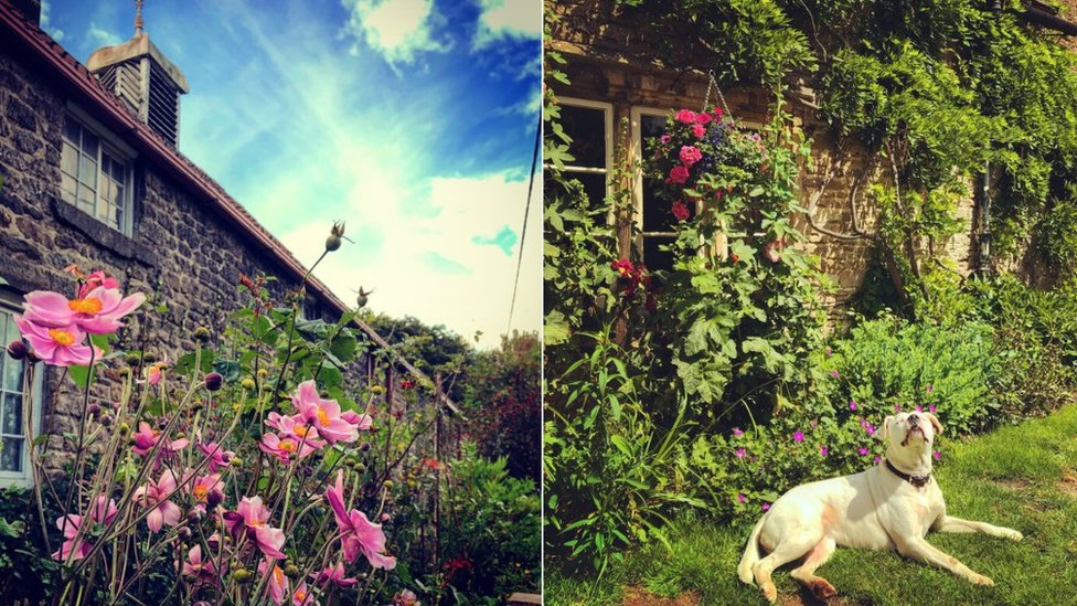Flowers outside cottage and dog in garden