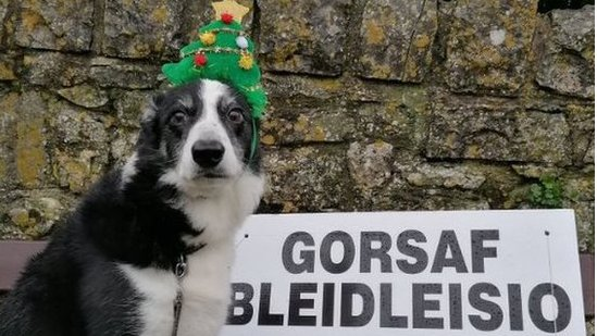 Twm insisted on wearing his Christmas tree headband for his polling station visit in the Vale of Glamorgan, Wales
