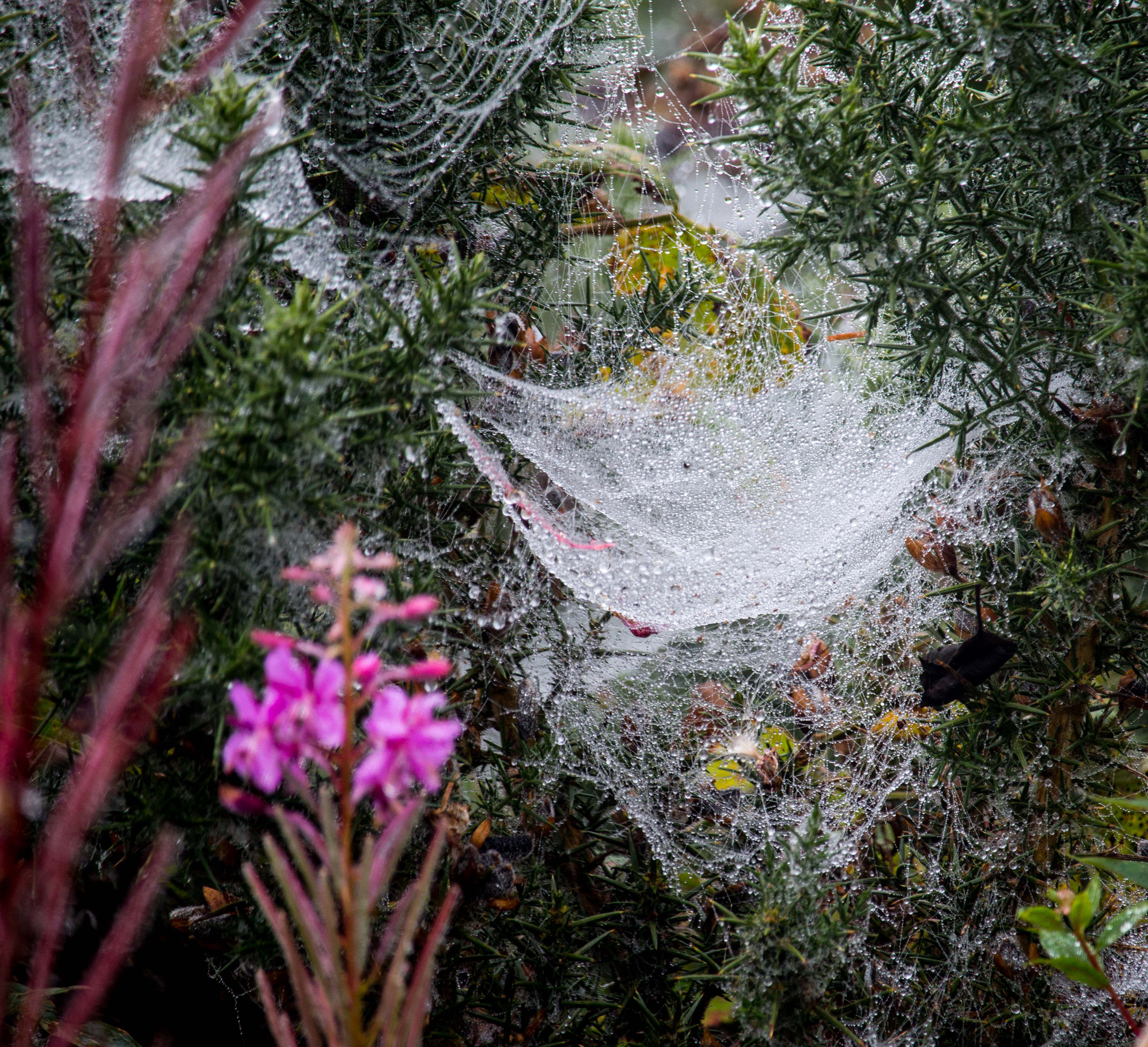 Cobwebs