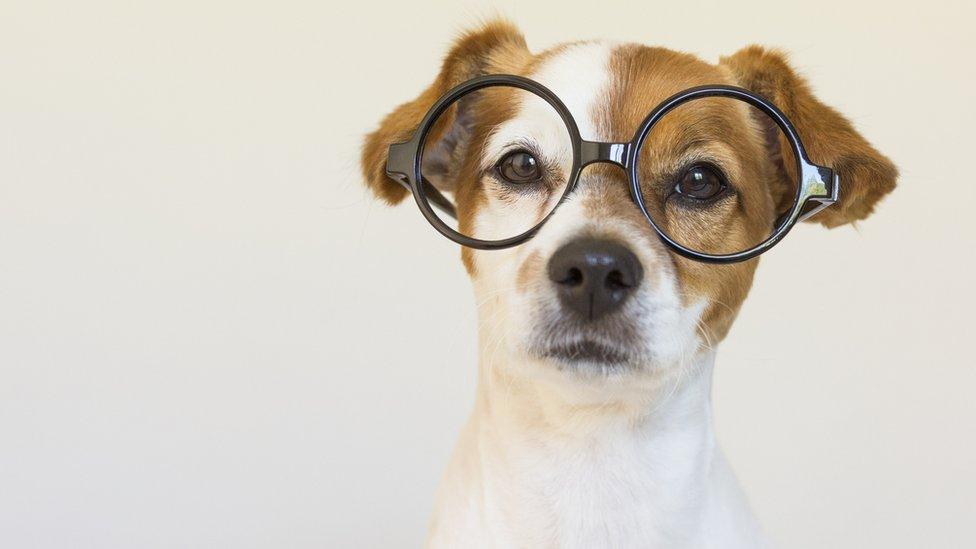 Un perro con lentes.