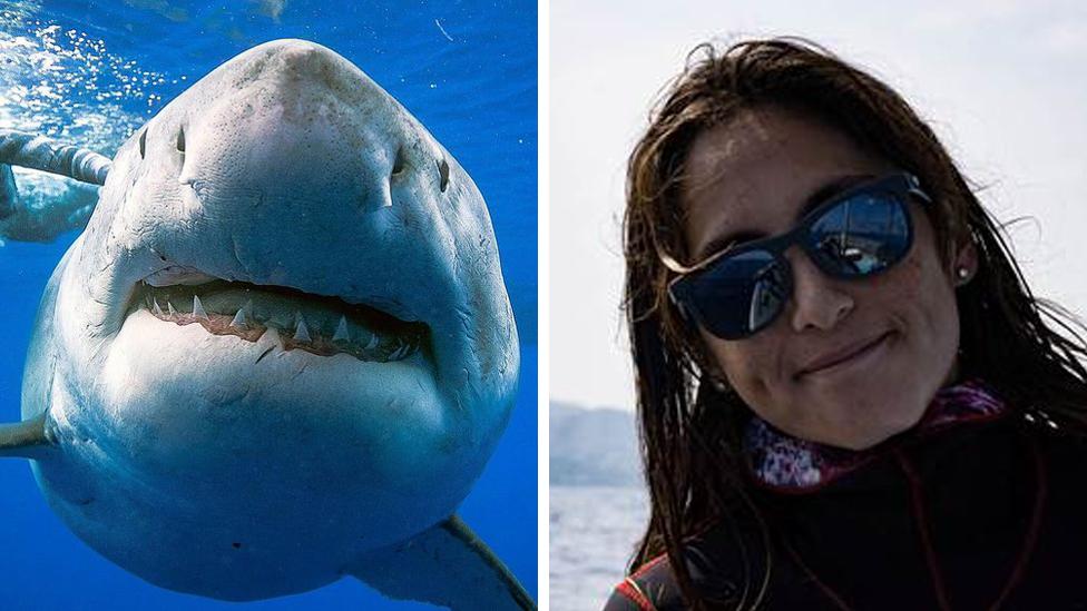 Great white shark photo: I swam with 'world's biggest'