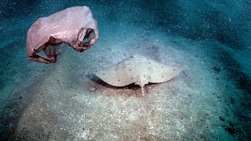 Hatay Samandağ'da bulunan Çevlik Akçay bölgesinde plastik poşetler vatozları ve diğer deniz canlılarını tehdit ediyor