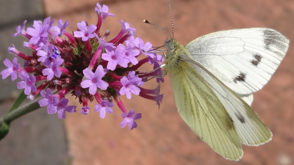 A small white butterfly is perched on a vivid purple flower.