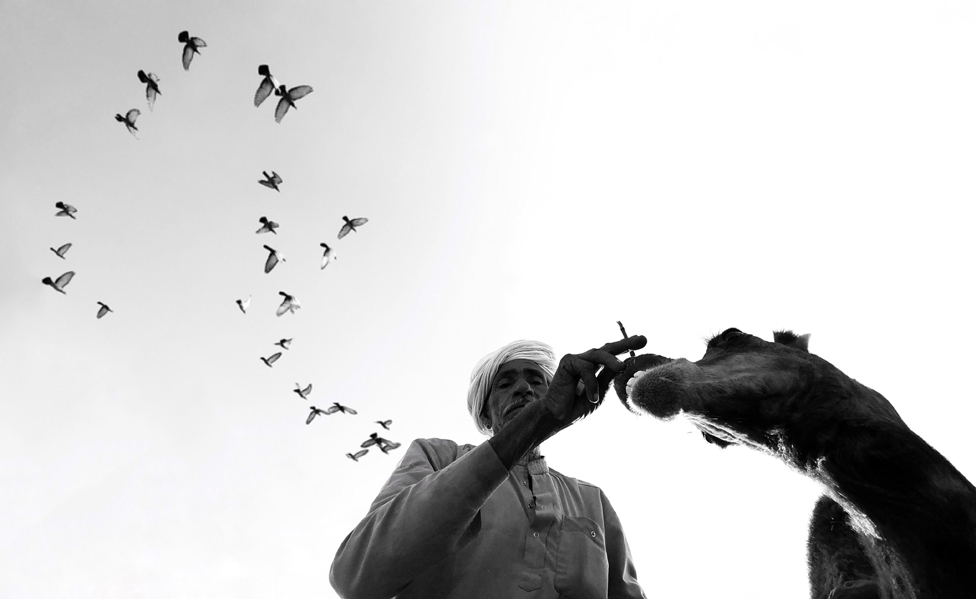 Čovek, kamila i ptice