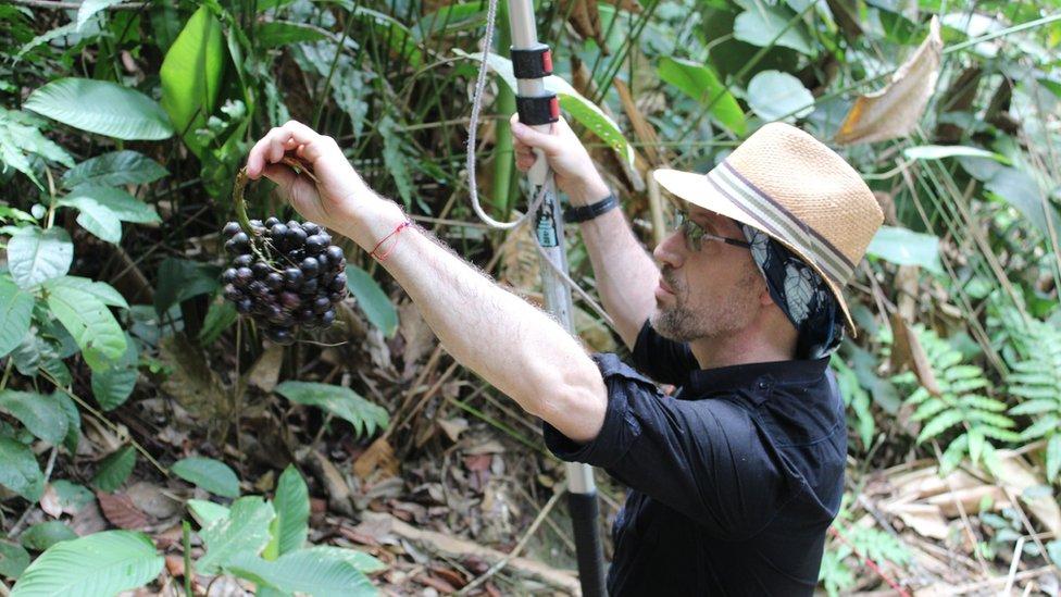 Mauricio Diazgranados examinando una planta en una expedición en Colombia.