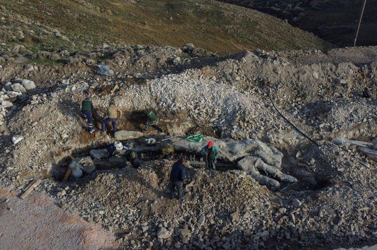 Midilli ağaç fosili