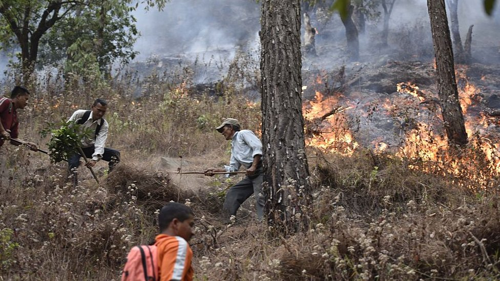 National Disaster Response Force personnel dousing forest fires in Uttarakhand district