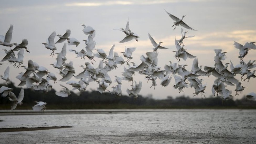 Birds fly over the Rio Doce (Doce River) in Linhares, where, according to Brazil's environmental regulator IBAMA, is about to be flooded with mud after a dam, owned by Vale SA and BHP Billiton Ltd burst, Brazil, November 19, 2015.