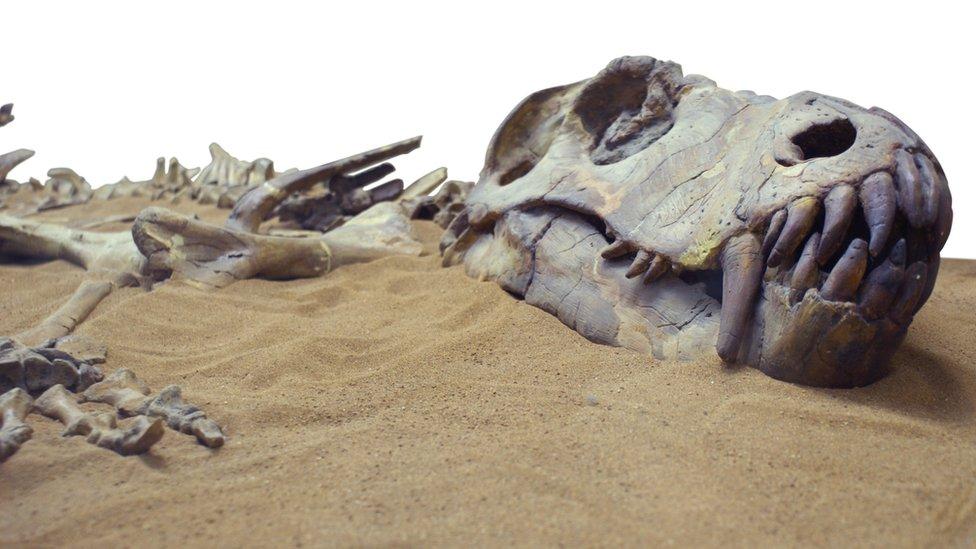 حفرية ديناصور