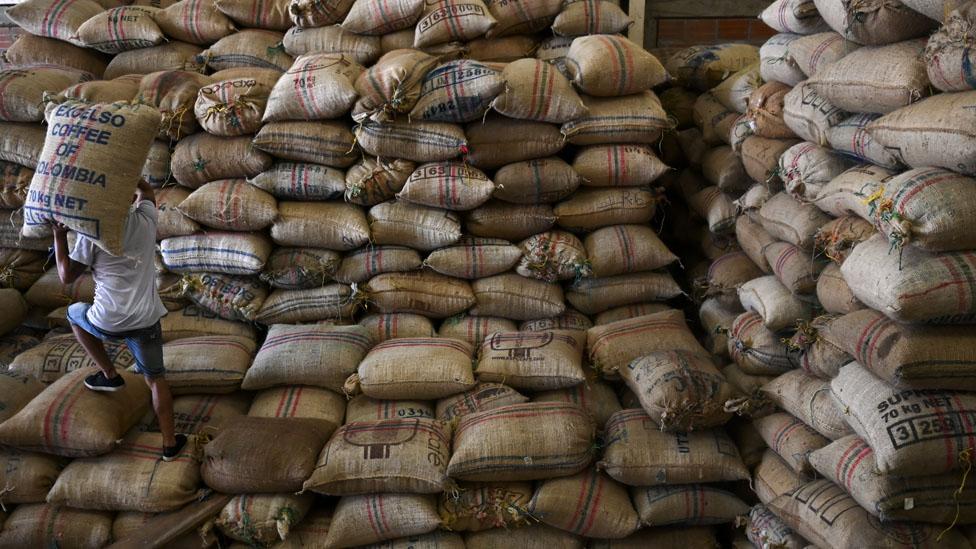 Recolector de Cafe en Colombia