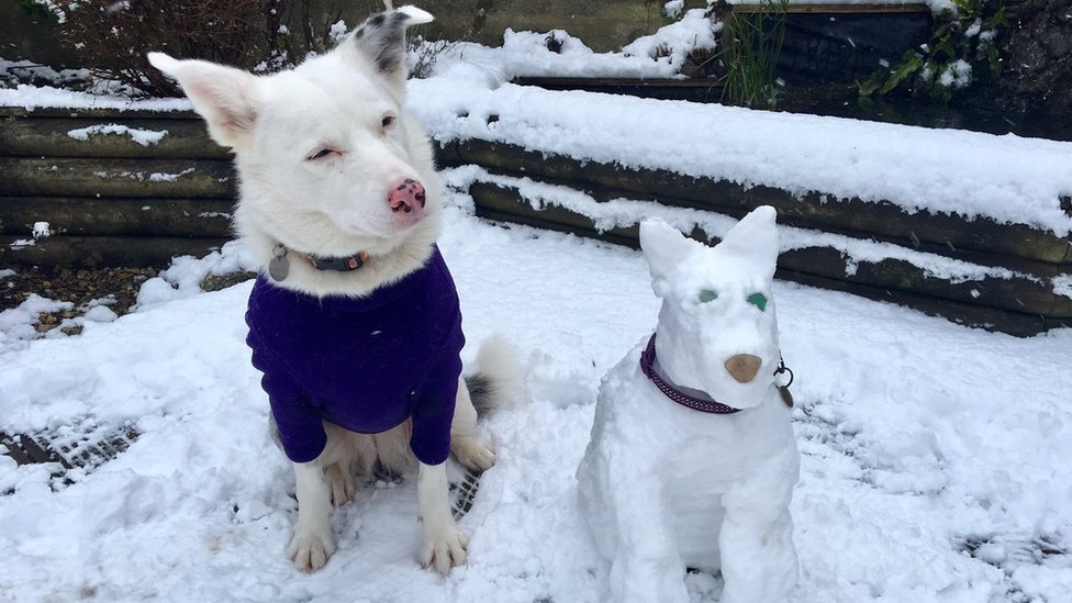 Snow dogs of England