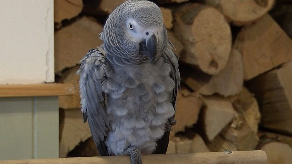 Meet Kara - the parrot who enjoys trekking and teasing dogs