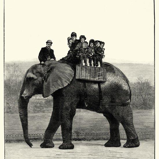 Jumbo che porta i bambini sulla schiena Foto: Wiki Commons